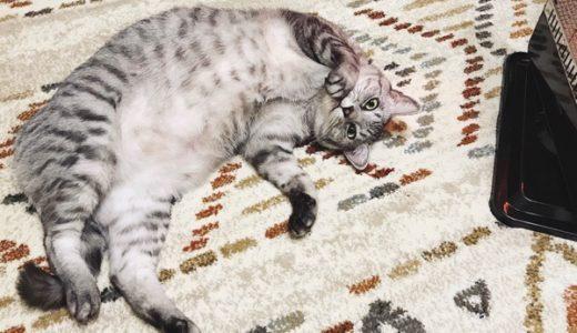 ヒーターの前で寝転がっているテト(サバトラ猫)。