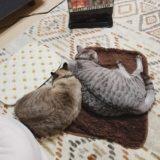 ヒーターの前で寝ている猫2匹。