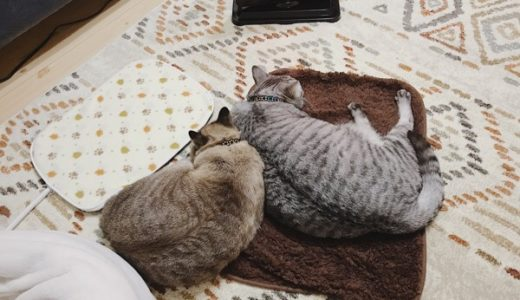 相変わらず不人気な猫用ホットカーペット