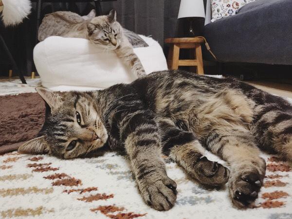寝ている猫たち。