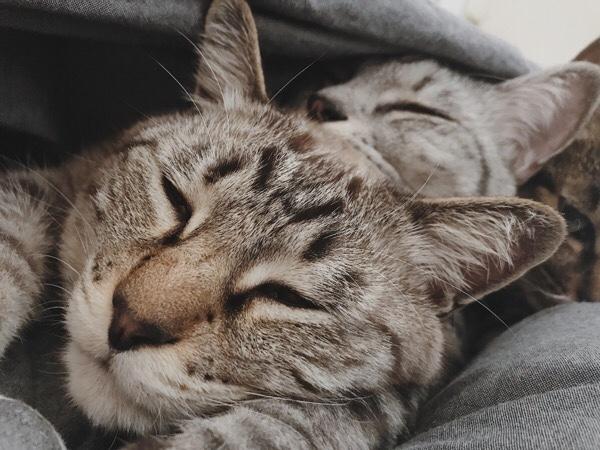 布団の中でモゾモゾしてる3匹の猫たち。