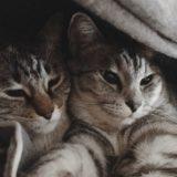 布団の中に潜り込んできた兄弟猫。