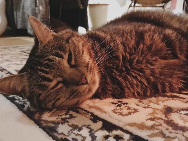 眠たそうな猫。