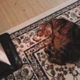 ヒーターの前で横たわっているジーナ(キジトラ猫)。