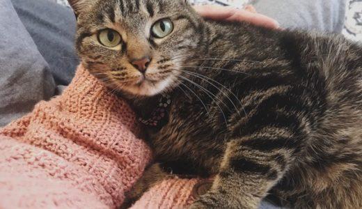 猫のリラックススタイル第2位『脚ピン』