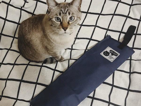 おもちゃが見えなくなってキョトン顔のムク(シャムトラ猫)。
