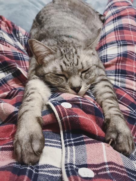 前脚を伸ばして寝てる猫。