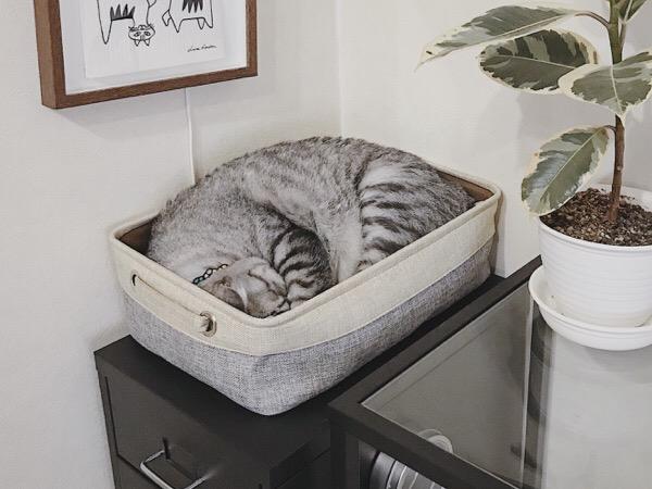 バスケットの中で丸まって寝ているテト(サバトラ猫)。