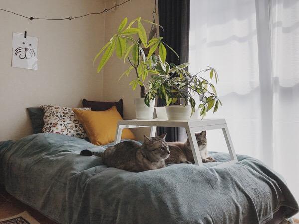 窓際で日光浴している猫と観葉植物。