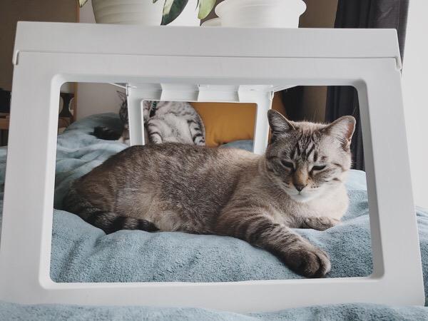 ベッドトレイの下で寝そべっているムク(シャムトラ猫)。