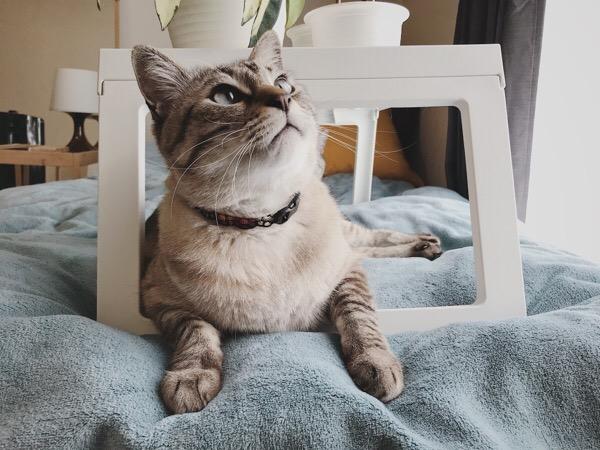 ひょっこり猫。