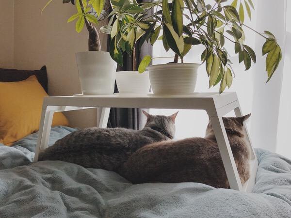 同じポーズで横たわっている兄弟猫。