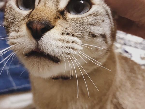 ぷっつりと半分くらいの長さに切られた猫のヒゲ。