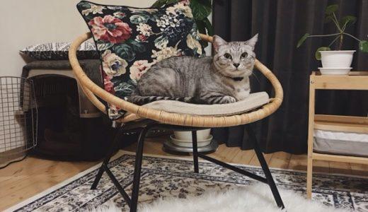 影に忍ぶ猫
