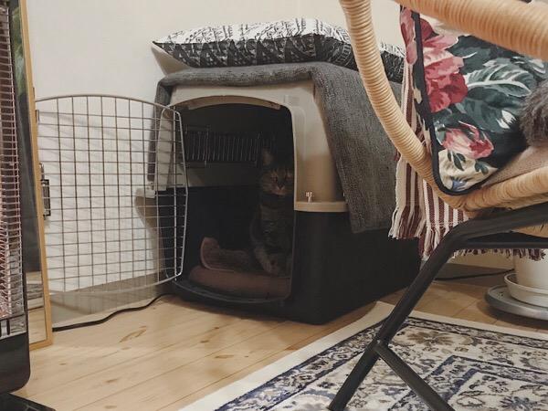 バリケンの中にひっそりと佇む猫。