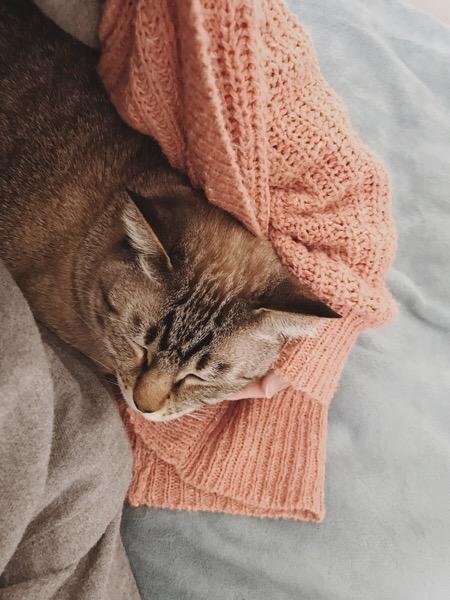 猫のアゴをなでているところ。