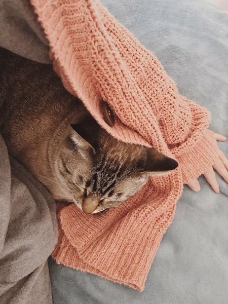 飼い主が着ているカーディガンに潜り込んで寝ているムク(シャムトラ猫)。