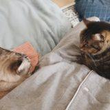 飼い主のそばに集まる猫たち。