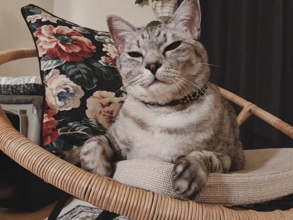 すっとぼけ顔の猫。