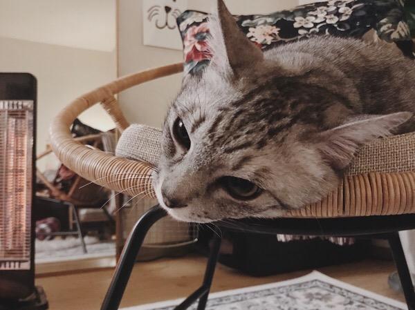 チェアのふちに顔を擦り付けている猫。