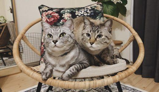 くっつきたい猫 vs. くっつきたくない猫
