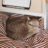 ひざ掛けの上で丸くなっている猫の後ろ姿。
