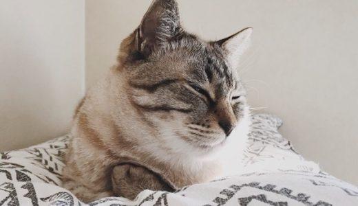 目を細めている猫。