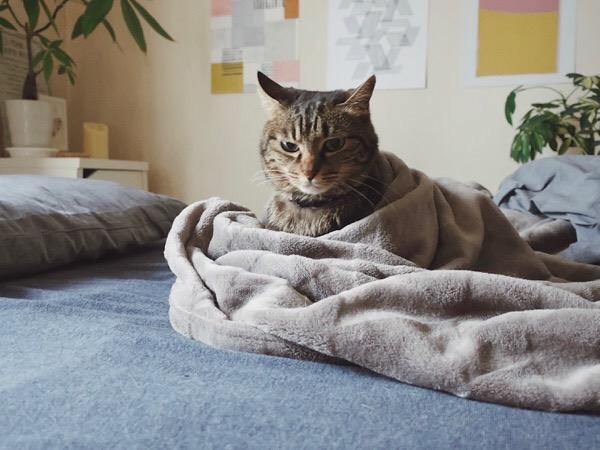 毛布から少し出てきたところ。