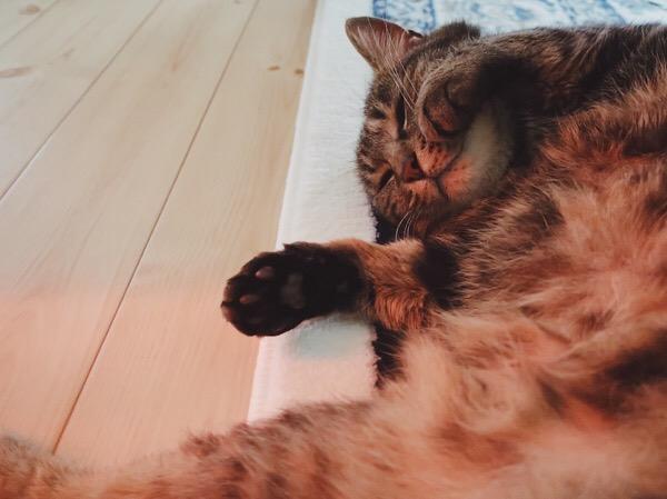 ヒーターの灯りで赤く照らされた猫のお腹。