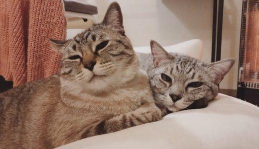 猫もあくびはうつる