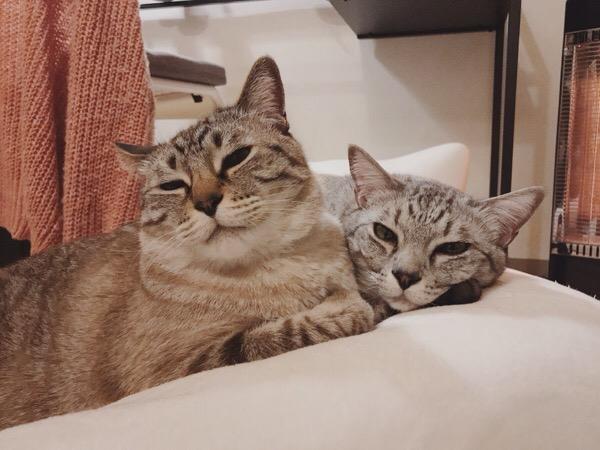 眠たそうな顔の兄弟猫。
