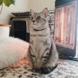 マトリョーシカみたいなシルエットの猫。