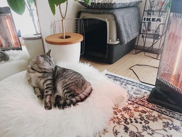 ヒーターに当たりながら毛づくろいをするテト(サバトラ猫)。