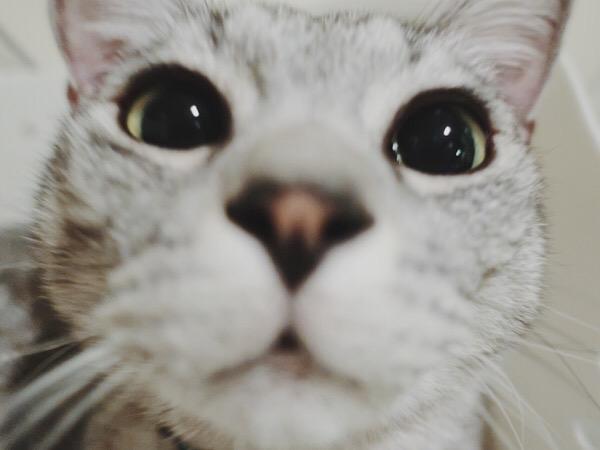 テト(サバトラ猫)の顔のどアップ。