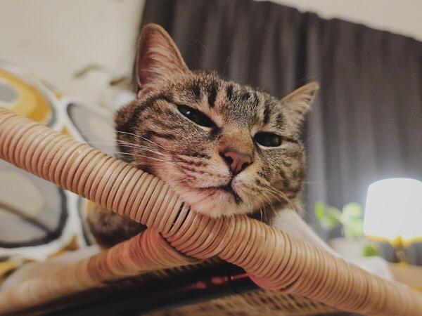 ヒーターに照らされて眠そうな顔のジーナ(キジトラ猫)。