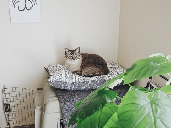 ウンベラータと猫。