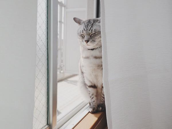 窓際で日向ぼっこしている猫。