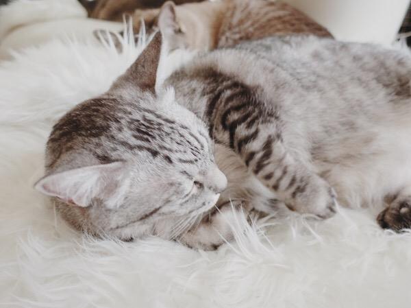 寝返りを打つ猫。