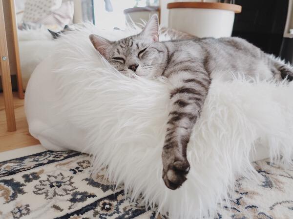 片方だけ前脚を伸ばして寝ている猫。