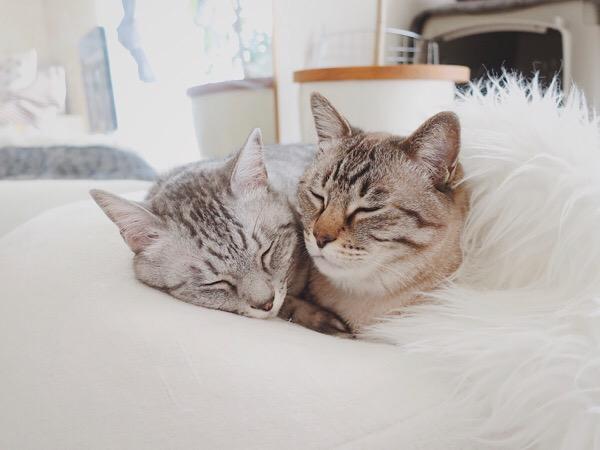 仲良くお昼寝する兄弟猫。