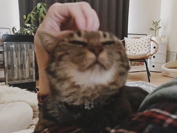 ジーナ(キジトラ猫)の頭をカキカキしてるところ。