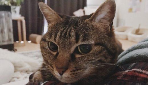 飼い主に添い寝する猫。