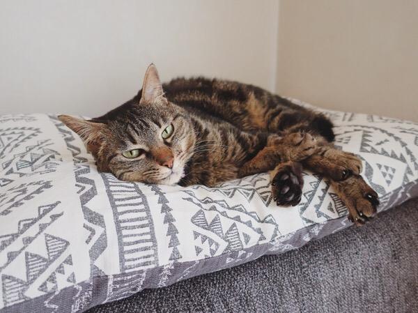 枕の上に横たわっているジーナ(キジトラ猫)。