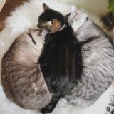 3匹並んだ猫団子。