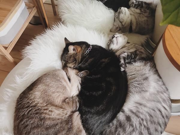 ベッドから落ちそうになってるテト(サバトラ猫)。