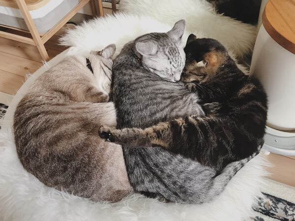 おしくらまんじゅう状態の猫たち。