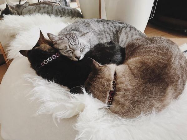 仲良く重なって寝ている猫たち。