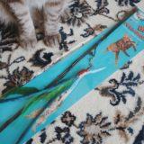 猫用おもちゃ「ダ・バード」