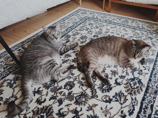 疲れて横たわる兄弟猫。