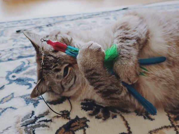 ダバードを抱き込んでいるムク(シャムトラ猫)。
